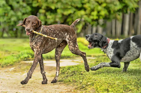 played: Two dogs