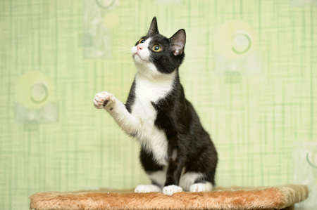 catlike: kitten Stock Photo