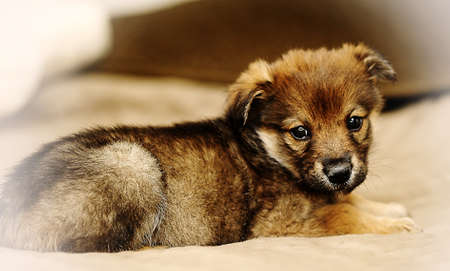 Brown cute puppy photo