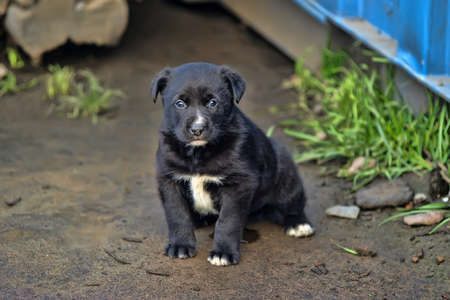 cute little black puppy photo