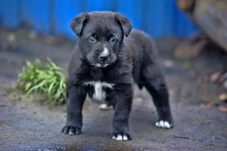 lindo negro peque�o perrito photo