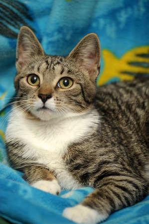 tabby cat Stock Photo - 15662386