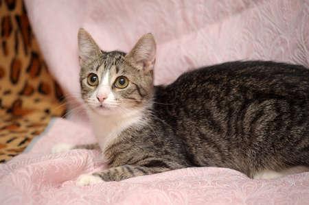 tabby cat Stock Photo - 15647860
