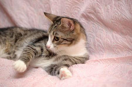 tabby cat Stock Photo - 15647846