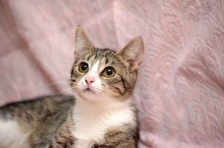 tabby cat with a white breast Stock Photo - 15647839