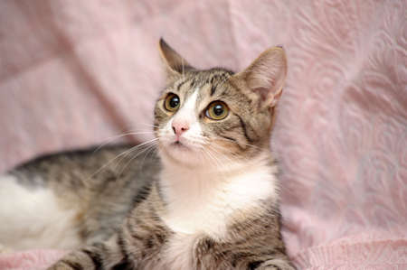 tabby cat with a white breast Stock Photo - 15647837