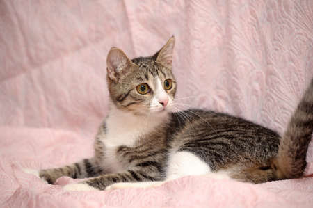 tabby cat with a white breast Stock Photo - 15647841