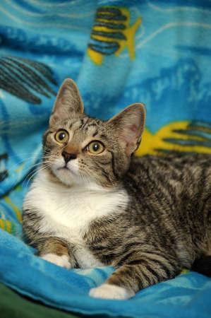 tabby cat   Stock Photo - 15647854
