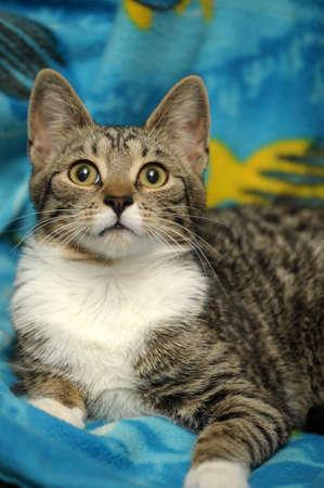 tabby cat Stock Photo - 15647850