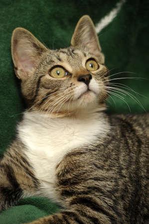 tabby cat  Stock Photo - 15647858