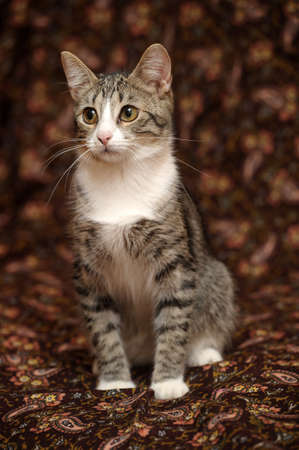 charming striped kitten photo