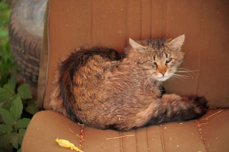 seeps: Abandoned cat