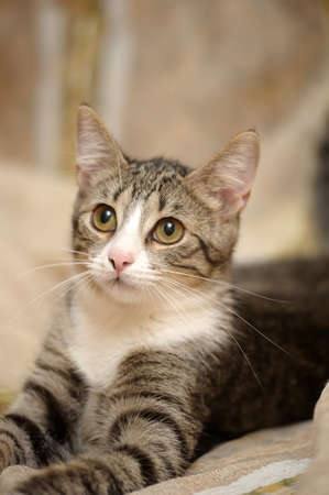 charming striped kitten Stock Photo - 15808867