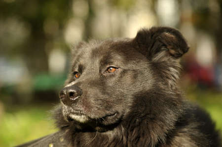black mongrel dog Stock Photo - 15808574