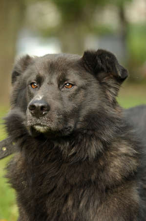 black mongrel dog Stock Photo - 15808582