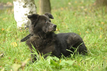 black mongrel dog Stock Photo - 15808581