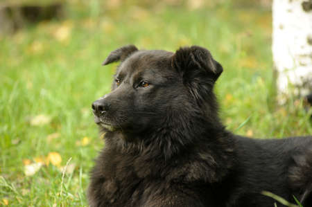 black mongrel dog photo