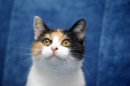 tricolor cat photo
