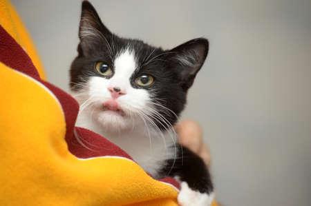Little kitten looking on front  Stock Photo
