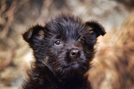 Puppy Stock Photo - 15805440