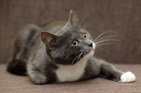gray cat with white cat photo