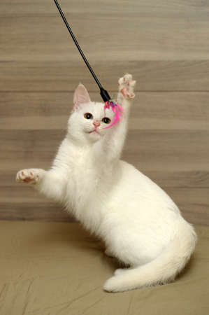 cute white kitten photo