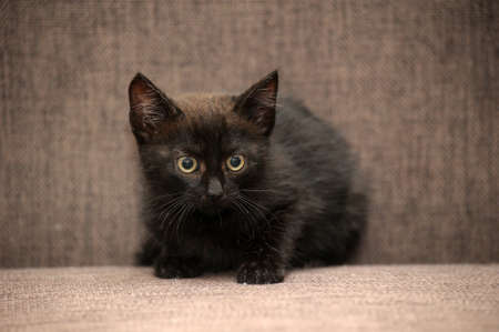 black kitten on the couch photo