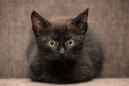 black kitten on a dark background photo