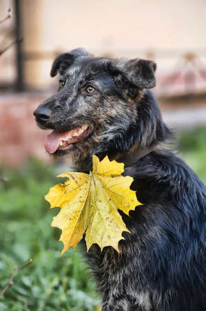 Autumn dog Stock Photo - 16037432