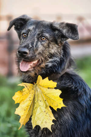 Autumn dog photo