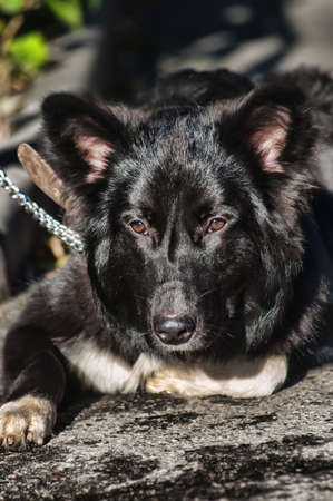 black with white chest mongrel dog Stock Photo - 17167097