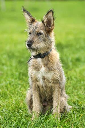 Half-breed puppy photo