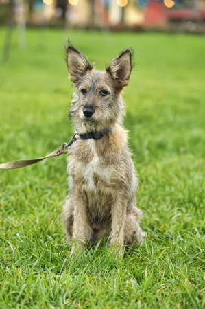 Half-breed puppy Stock Photo - 16034584