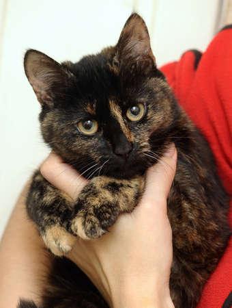 Cat tortie color  Stock Photo - 16034607