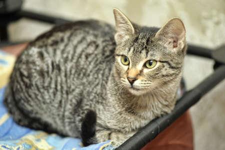 Cute Tabby Kitten Stock Photo - 16009399