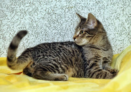 Cute Tabby Kitten Stock Photo - 16009404