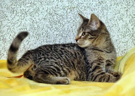 Cute Tabby Kitten Stock Photo - 16009404
