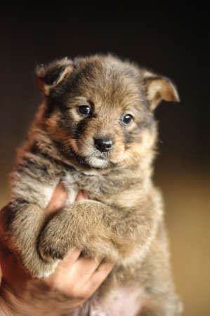 dogie: funny little brown puppy