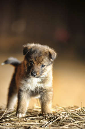 funny little brown puppy photo