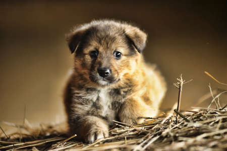 defenseless: funny little brown puppy