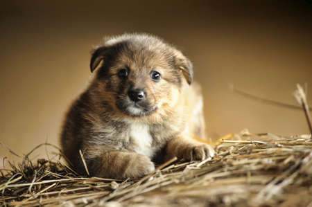 funny little brown puppy Stock Photo - 16034658