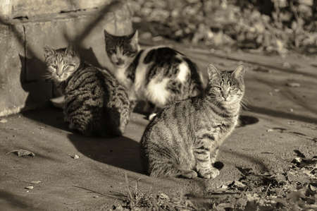 cats on the street photo