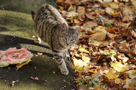 gray striped cat on the street Stock Photo