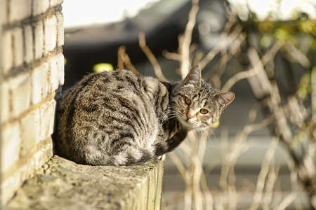 unambiguous: gray striped cat on the street Stock Photo