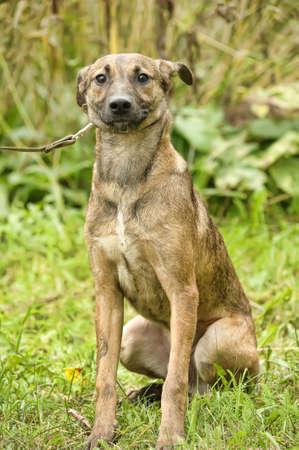 dogie: Half-breed puppy