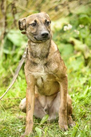 Half-breed puppy Stock Photo - 16114119