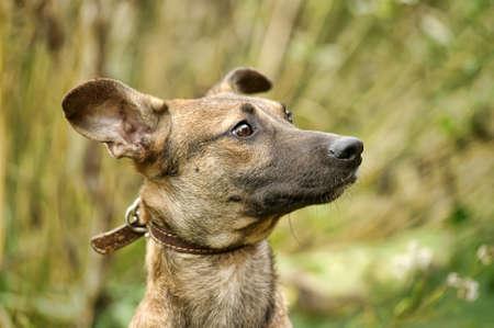 Beautifol portrait of a street dog Stock Photo - 17108621