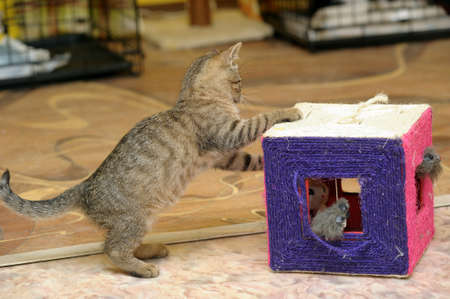 funny kitten playing Stock Photo - 16411737