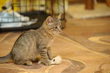 funny kitten playing Stock Photo - 16411736