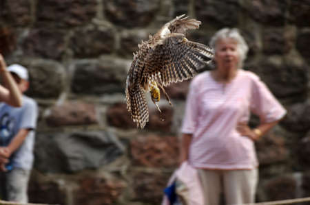 sparrowhawk: falconers, medieval festival in Vyborg, Russia Editorial